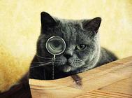 猫血巴尔通氏体病
