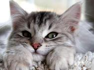 有關貓咪牙齒的問題及保健