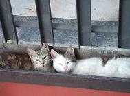 小猫为什么会腹胀?