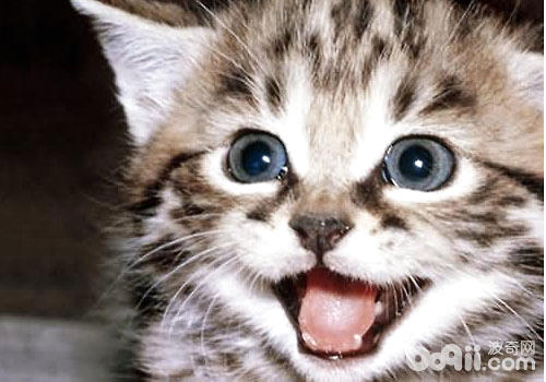 往往是主人们经常忽略的地方,经常是等到猫咪张嘴,产生了一股令人发指