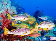 如何安全地在水族中使用臭氧