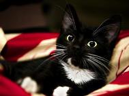 猫咪被毛系统的基本知识