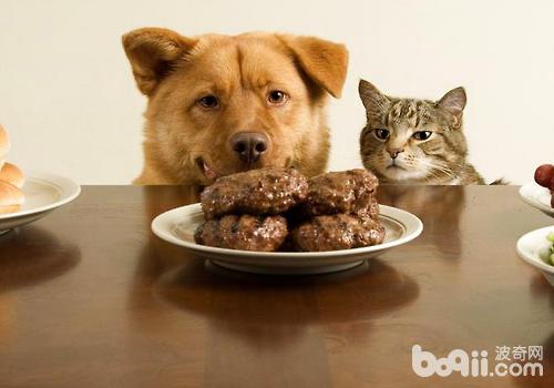为了营养问题,最好不要长时间以纯素食物喂食狗狗
