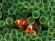 引起鱼鳃感染的原因