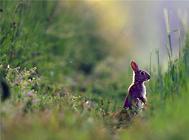 【美食攻略】自制兔子爱吃的草饼