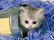 如何安全的接触猫咪