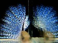 刚生的孔雀鱼如何饲养