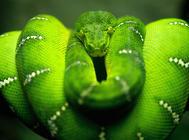 蛇过冬加温要注意什么