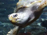 龟蛋孵化夭折原因及防止措施