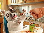 狗狗吃猪肉好不好