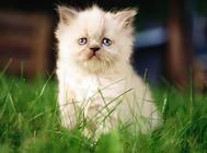 【美食攻略】自制猫咪香米鸡丝小鱼干