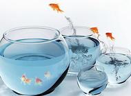 换水对水草光合作用的影响