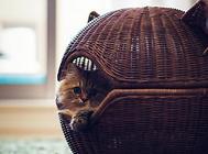 猫咪吐黄水的原因及治疗