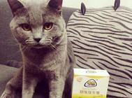 【产品测评】喵想猫咪专用益生菌