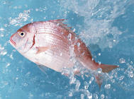 金鱼养殖疾病的预防