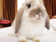 布置兔窝需要哪些东西