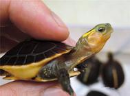 保证养龟利益的三个重要因素