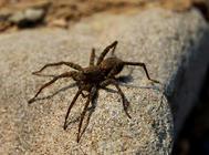 蜘蛛常见疾病及处理