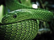 蛇的消化系统如何