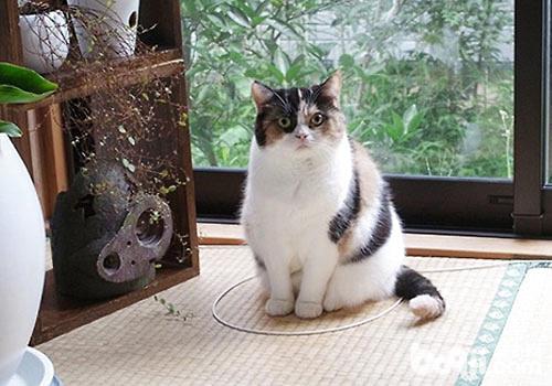 猫咪乖乖地待在圈子里