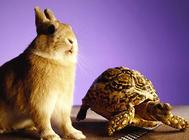 水龟饲养与温度的关系