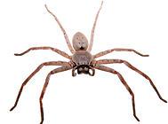 蜘蛛喂食原则
