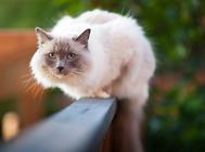 画个圈就能圈住猫咪是真的吗?