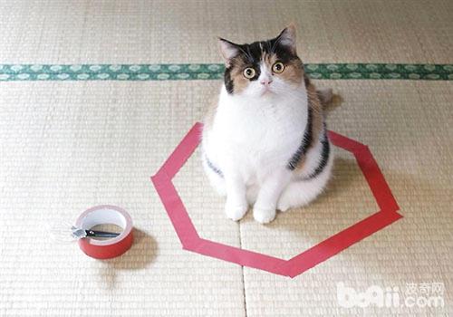 地上画圈能圈住猫咪?
