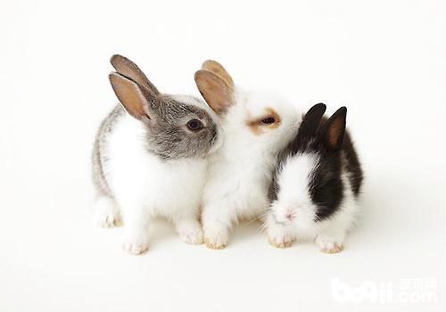 断奶幼兔的饲养管理