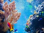 观赏鱼天然饵料的优缺点