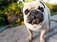 狗狗体内酸碱物质的来源