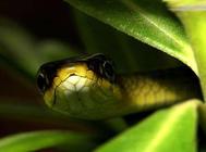 养蛇过冬要注意哪些问题