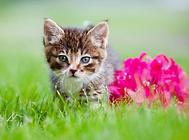 猫咪对哪些东西感兴趣?