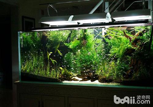 鱼缸的植物过滤方式