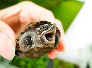 怎样判断小龟是否吃饱了?