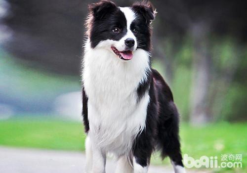 观察好狗狗的表情及症状,防止在狗狗焦虑的时候接近它
