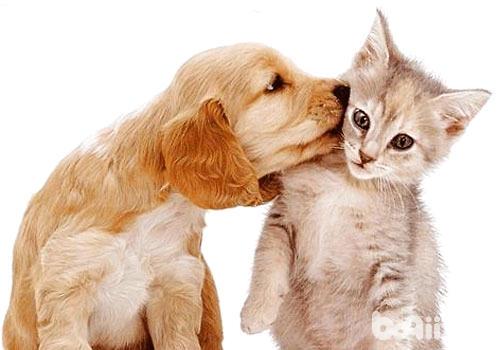 猫狗也能互帮互助