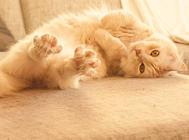 猫咪也能护主吗?