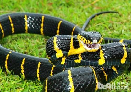 蛇的活动与温度和湿度也有很大的联系