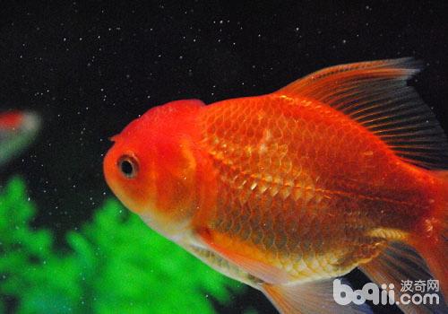 鱼类在饲养过程中也会产生人鱼共患病