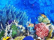 海金鱼类热带鱼饲养方法