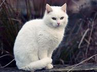 猫咪可以当间谍吗?