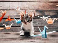 猫咪喜欢我们给它的玩具吗?