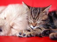 冬天了,猫咪如何保暖?