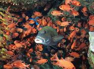 小型神仙鱼饲养方法