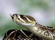 如何处理蛇的病毒性疾病