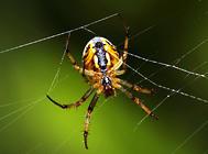蜘蛛不进食的原因有哪些