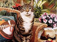 猫咪为什么乱撒尿?