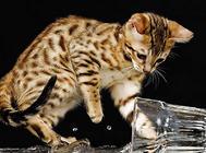 给流浪猫一个家