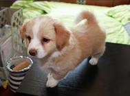 蛋黄对狗狗有哪些作用